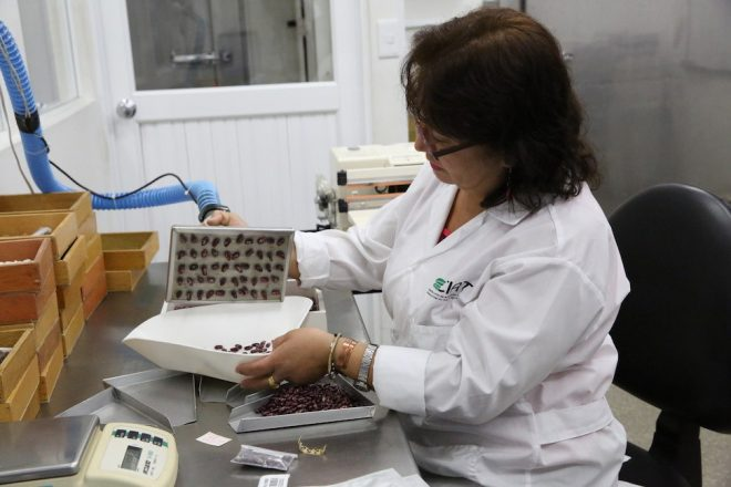 Process of counting seeds before packaging in the CIAT genebank. <br/>Credit: Shawn Landersz